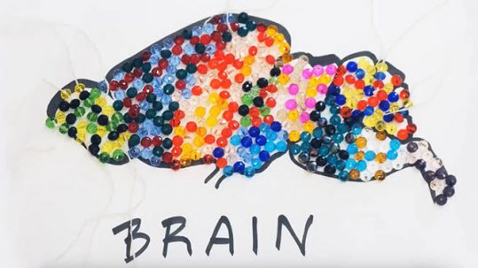 Brain in colored cells