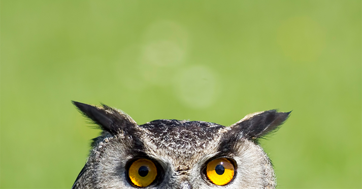 an owl peeking up from the bottom edge of the photo